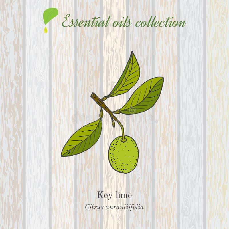 Collection pure d'huile essentielle, chaux Fond en bois de texture illustration de vecteur
