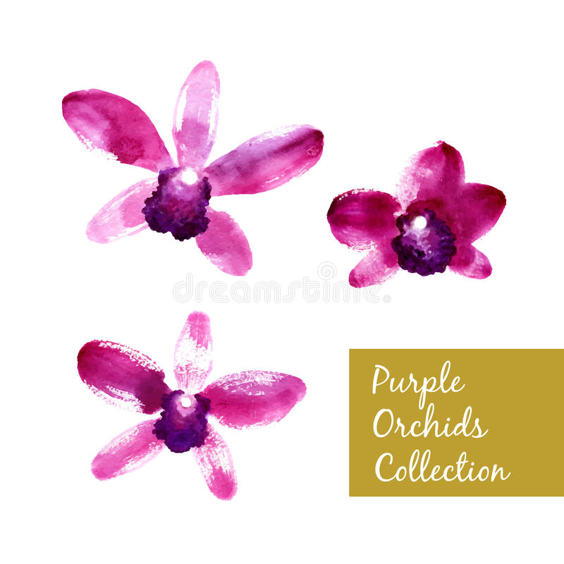 Collection of purple watercolor orchids royalty free illustration