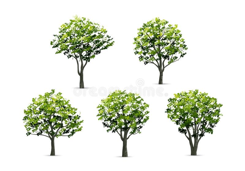 Collection of realistic tree isolated on white background. vector illustration