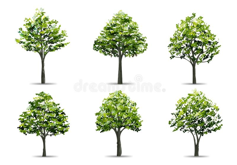 Collection of realistic tree isolated on white background. Natural object for landscape design, park and outdoor graphic. Vector vector illustration
