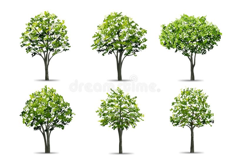 Collection of realistic tree isolated on white background. Natural object for landscape design, park and outdoor graphic. Vector stock illustration