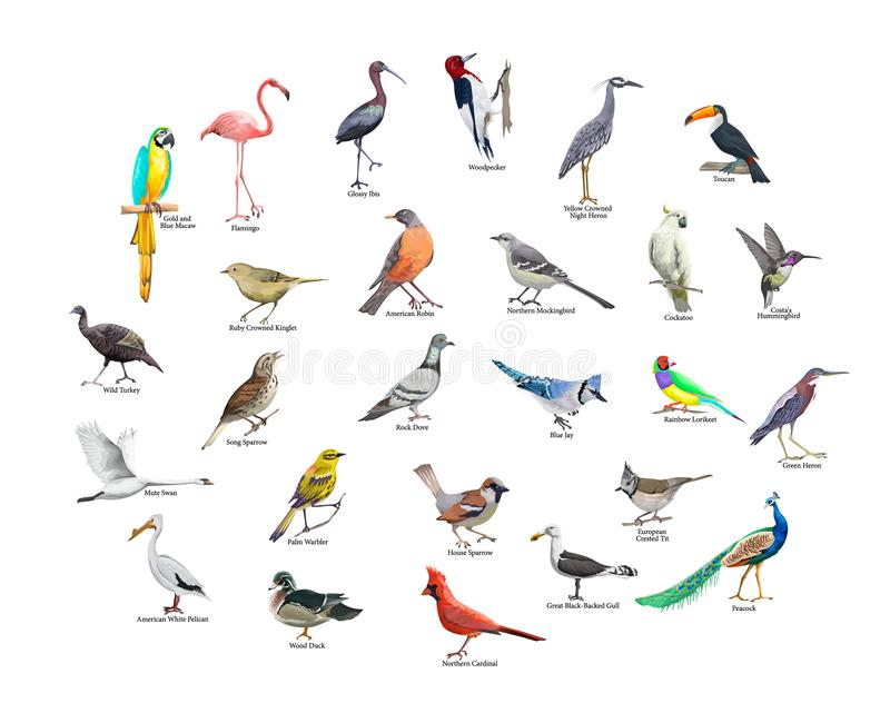 Collection of realistic tropical birds. Exotic wildlife. Collection of realistic tropical birds. Parrot and toucan, flamingo and ara. Exotic birds in wildlife vector illustration