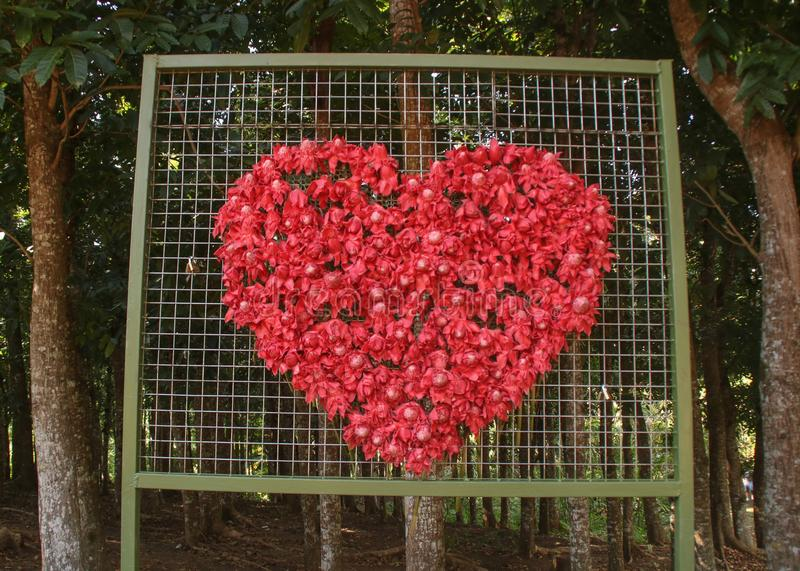 A collection of red flowers forming a shape of a heart stock images