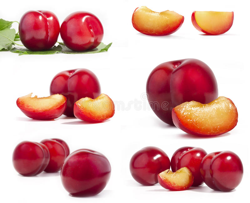 Download Collection of red plum stock photo. Image of fruit, still - 24136344