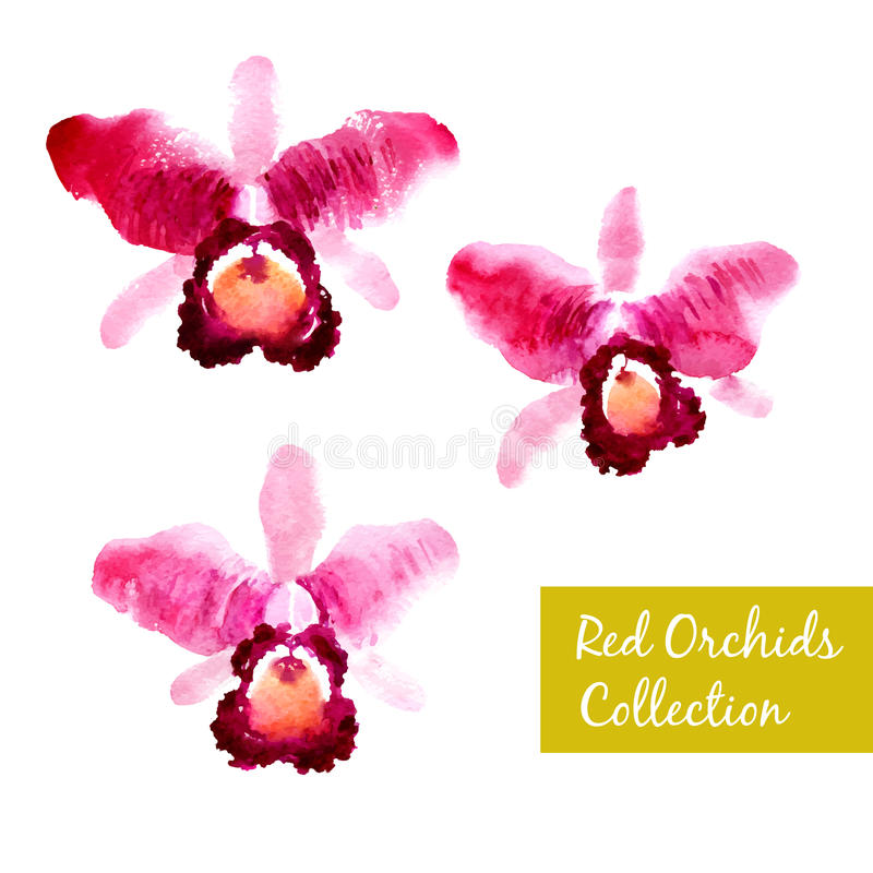 Collection of red watercolor orchids vector illustration