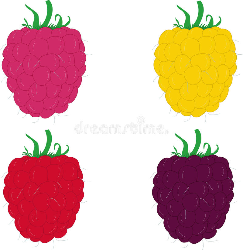 Collection of ripe raspberries. Vector illustration. royalty free illustration