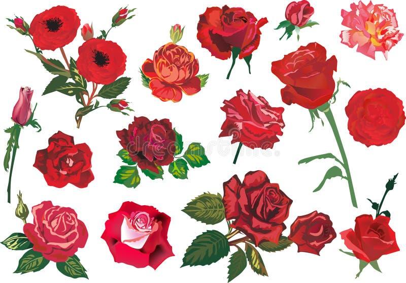 Collection rouge de quinze roses illustration stock