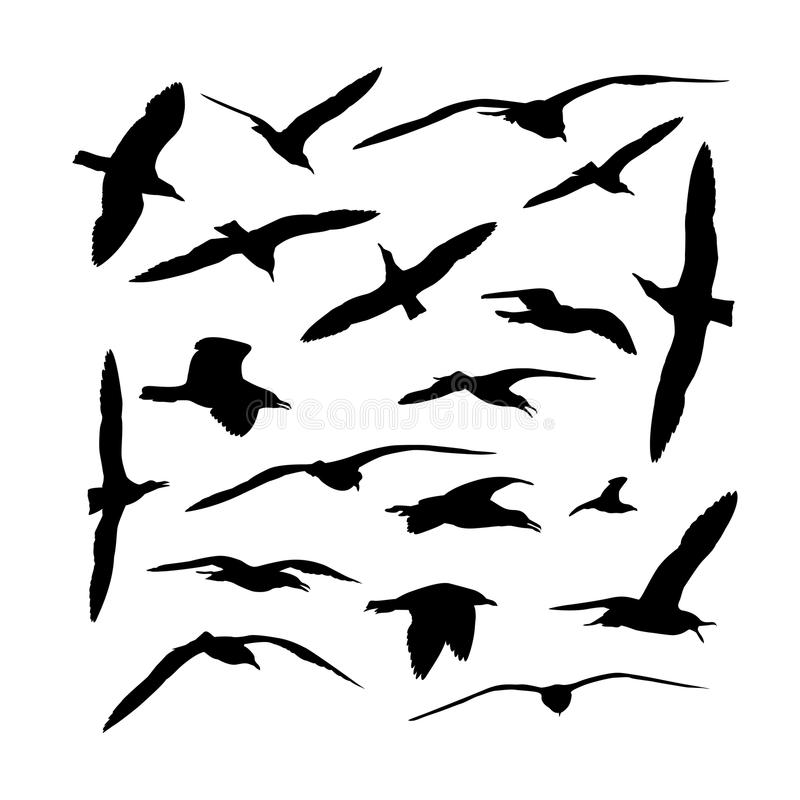 Collection of sea gull birds silhouettes. Vector set of sea gull birds silhouettes royalty free illustration