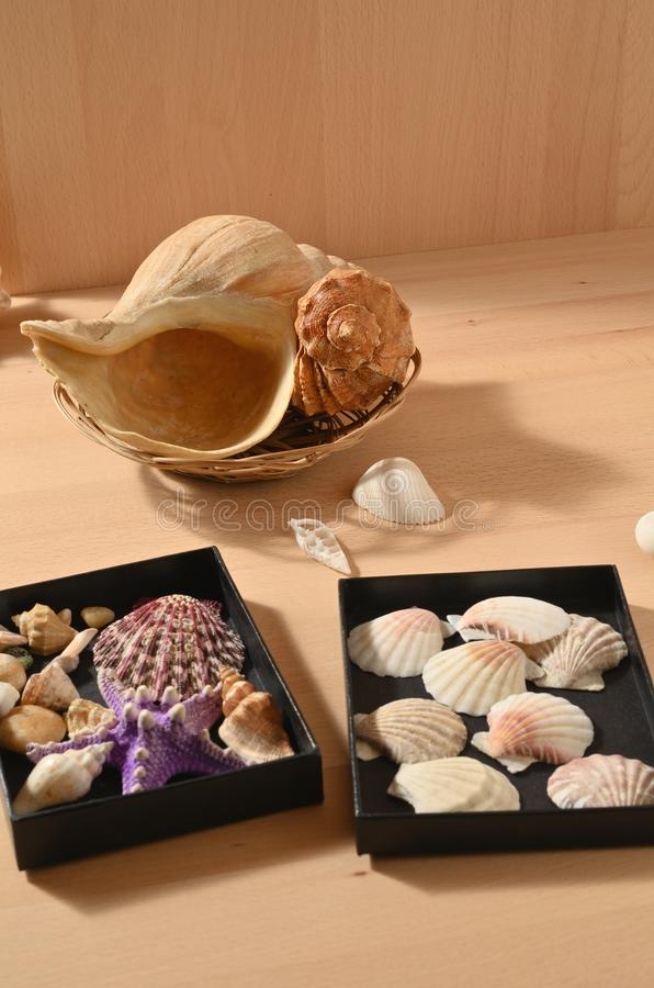 Collection of sea mollusks. Seashells on a wooden table. Shellfish decorations stock photography