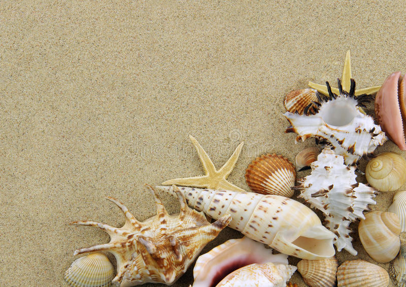 Download Collection of seashells stock photo. Image of tropical - 19841346