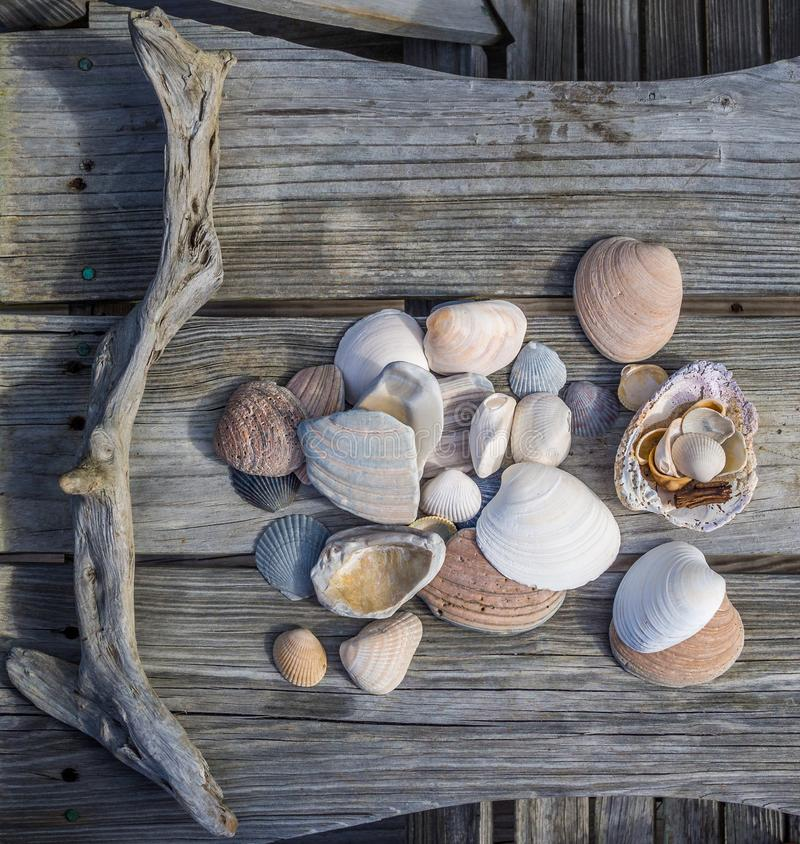 Collection of seashels stock images