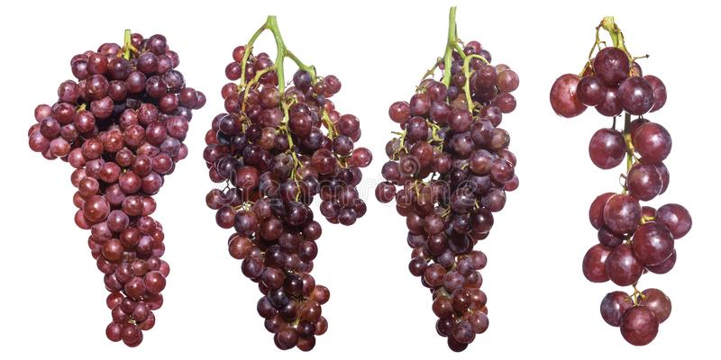 Seedless grape isolated on white background. royalty free stock images