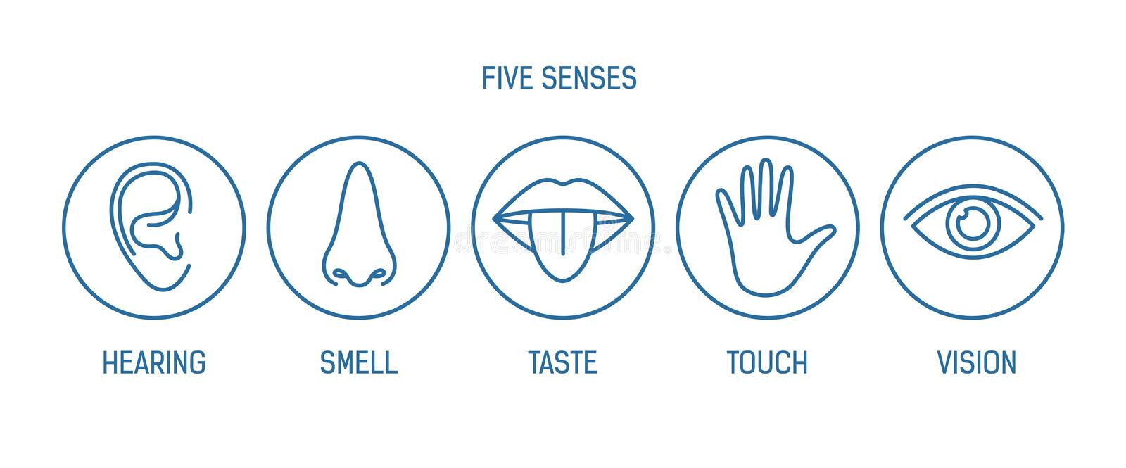 Collection of 5 senses - hearing, smell, taste, touch, vision. Bundle of human sensory organs drawn with contour lines stock illustration
