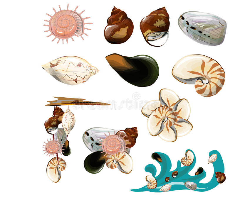 Collection of shell stock illustration