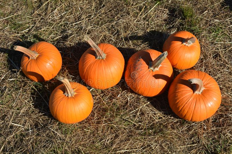 Six pumpkins for sale on a farm near Salem, Oregonm, Oregon. This is a collection of six small pumpkins for sale on a farm east of Salem, Oregon royalty free stock images