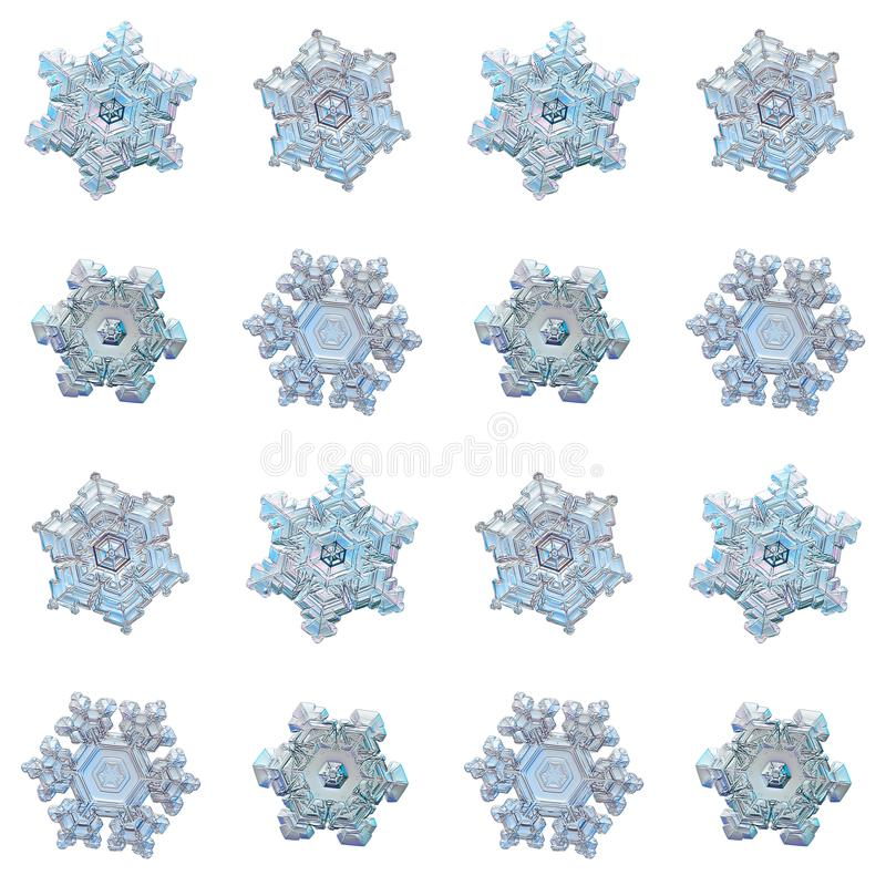 Collection of snowflakes isolated on white background. Macro photo of real snow crystals: small star plates with glossy relief surface, simple shapes, large royalty free stock photo