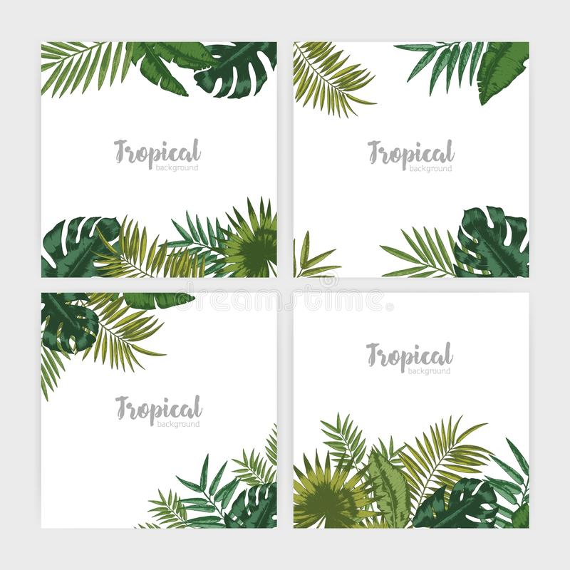 Collection of square backdrops with green tropical leaves. Bundle of backgrounds with foliage of palm tree and exotic royalty free illustration