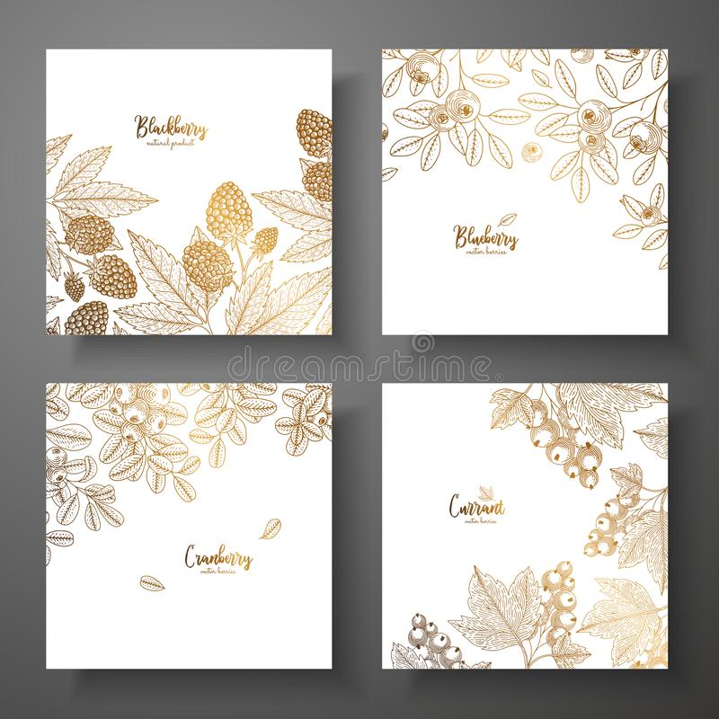 Collection of square gold cards with berries. Vector vintage frame with blackberry, bluberry, cranberry, currant. Great vector illustration