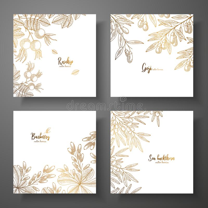 Collection of square gold cards with berries. Vector vintage frame with rosehip, goji berries, barberry, sea buckthorn stock illustration