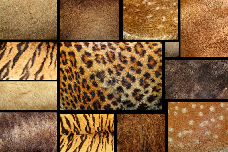 Collection of textured - animal fur. Collection of natural textures - animal furry pelts stock photos