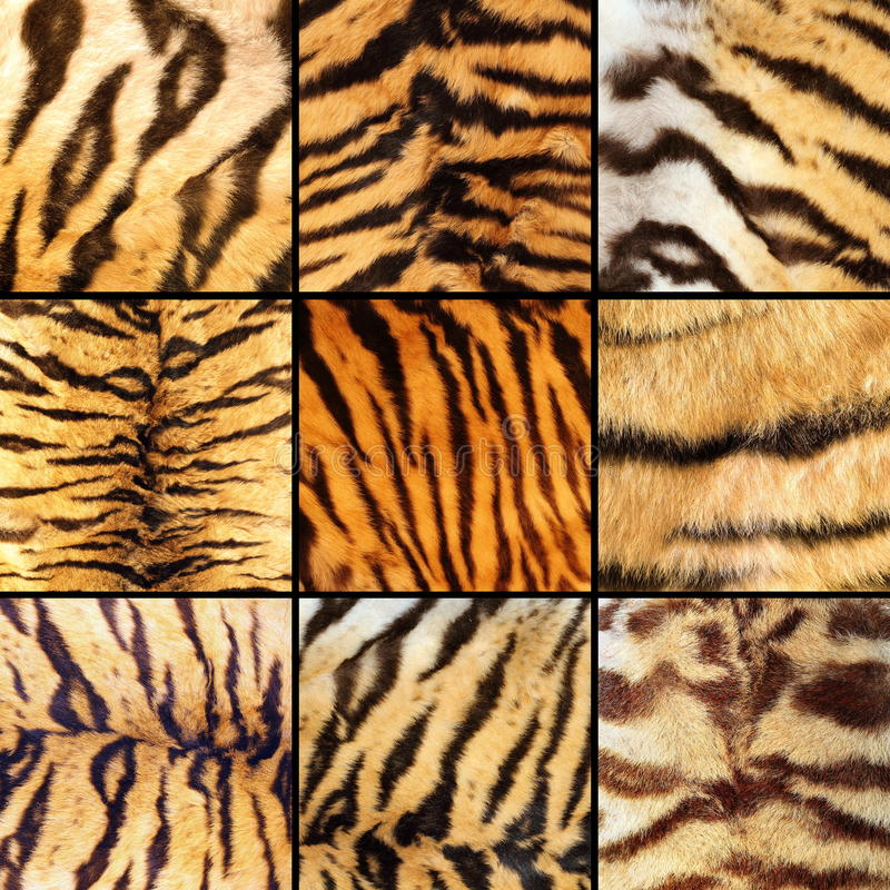 Collection of tiger stripes. Beautiful natural textuires of pelts stock image