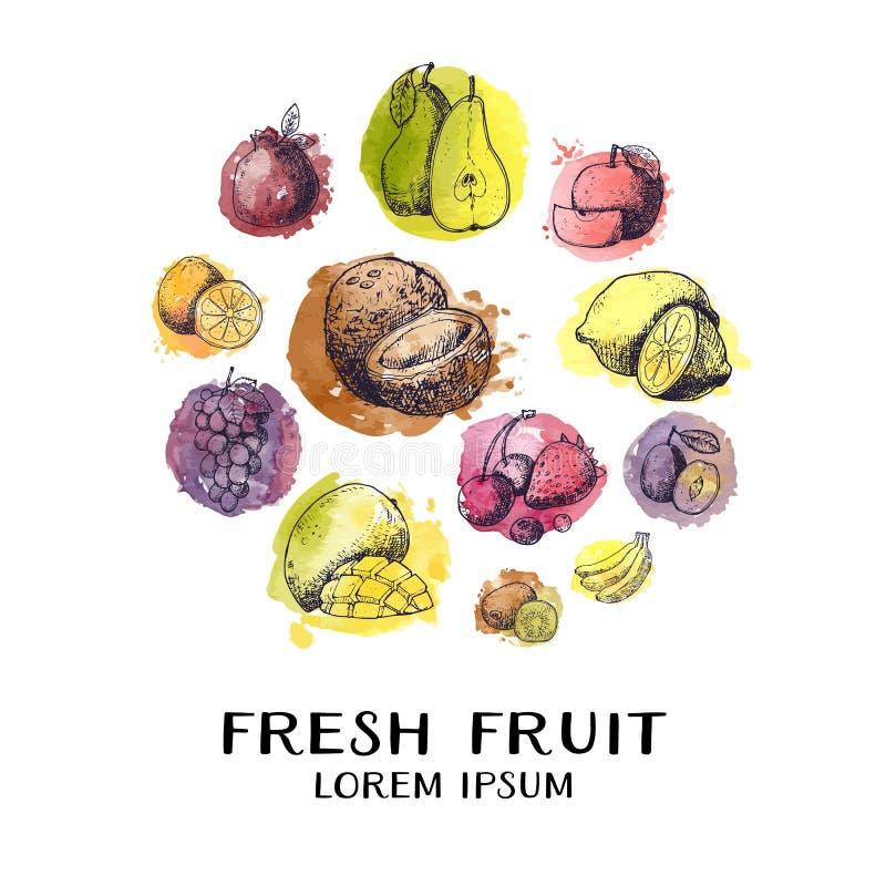 Collection tirée par la main d'encre de cru de fruits frais dans le croquis de cercle pour des cartes Illustration de vecteur for illustration stock