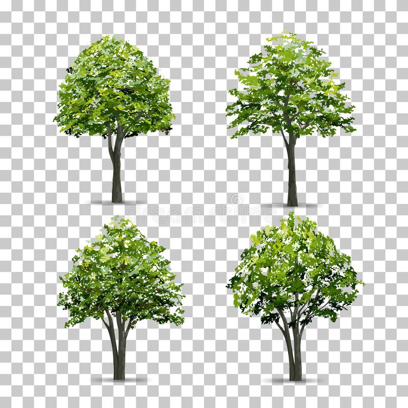 Collection of Tree isolated on transparent background with soft shadow. Vector. vector illustration