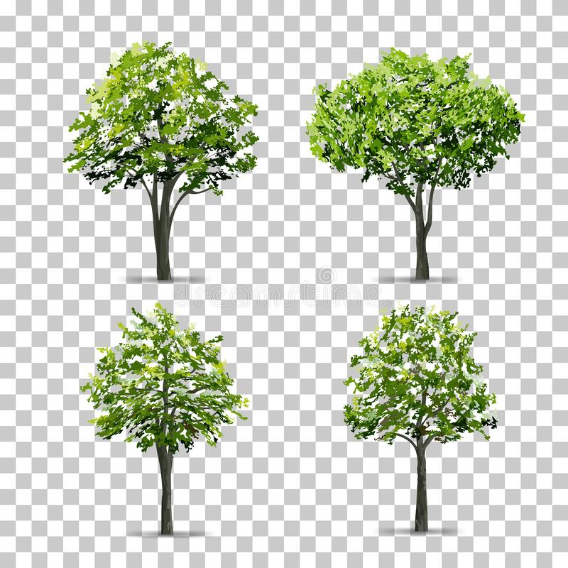 Collection of Tree isolated on transparent background with soft shadow. Vector. stock illustration
