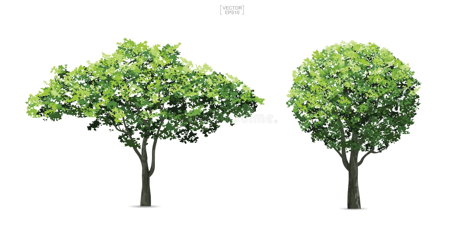 Collection of tree isolated on white background. vector illustration