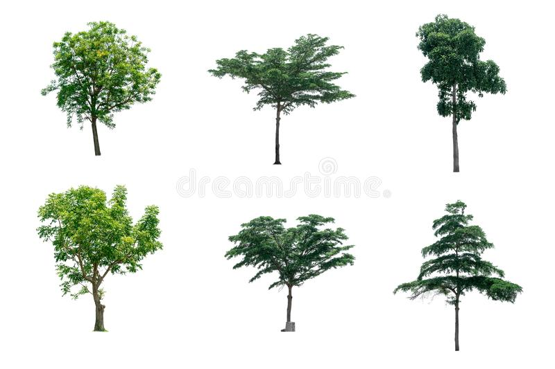 Collection trees of isolated on white background stock photo