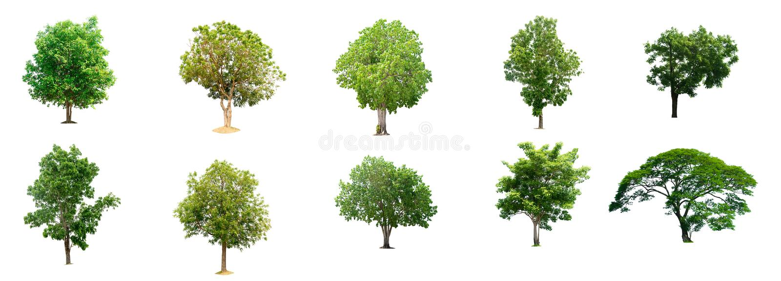 The collection of trees isolated trees. On white background vector illustration