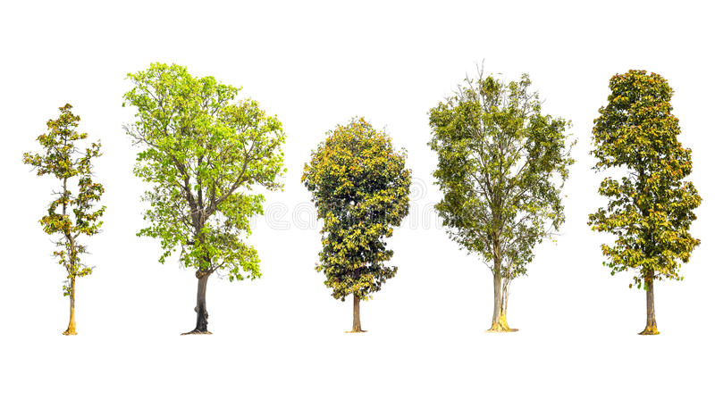Collection of trees isolated royalty free stock photos