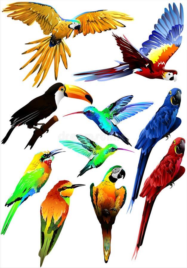 Collection of tropical birds. (Vector) vector illustration