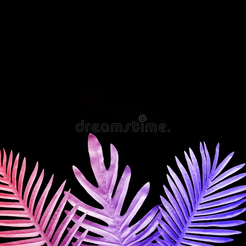 Collection of tropical leaves,foliage plant in gradient color on black background vector illustration