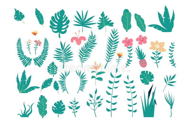 Collection of tropical leaves of various plants isolated on white background. Set of natural design elements. vector illustration