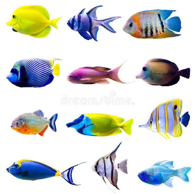Collection tropicale de poissons photos stock