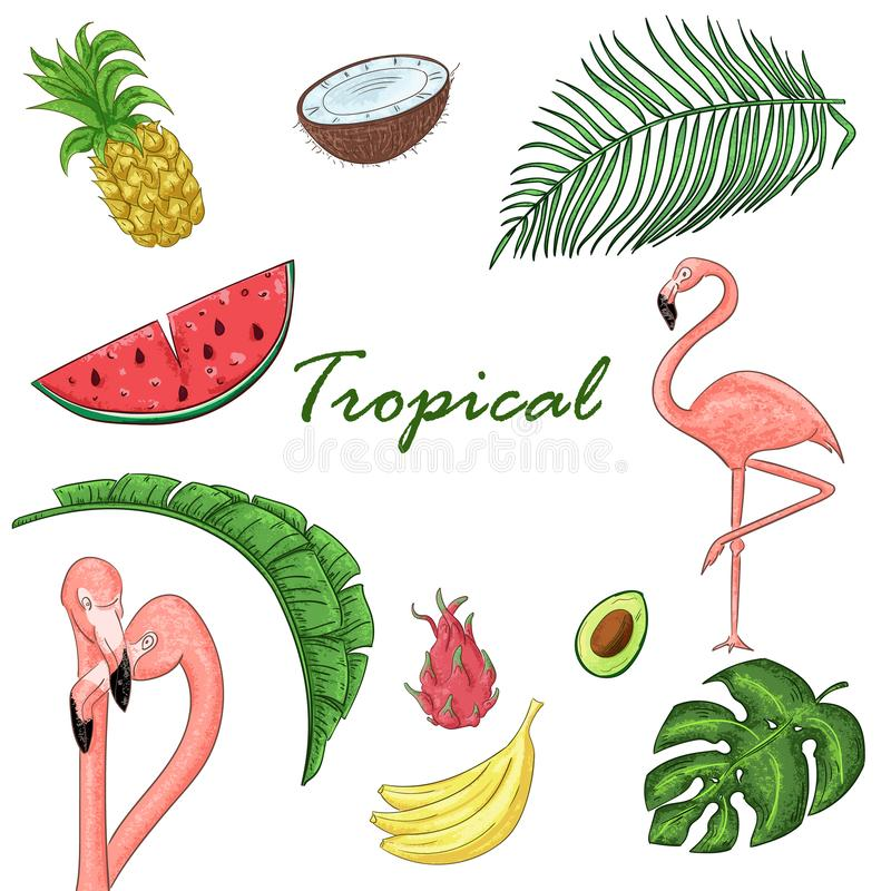 Collection tropicale pour les feuilles, les flamants et les fruits exotiques d'été illustration libre de droits