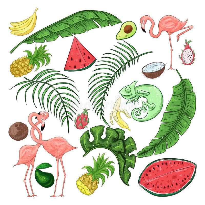 Collection tropicale pour les feuilles, les flamants et les fruits et le caméléon exotiques d'été illustration libre de droits