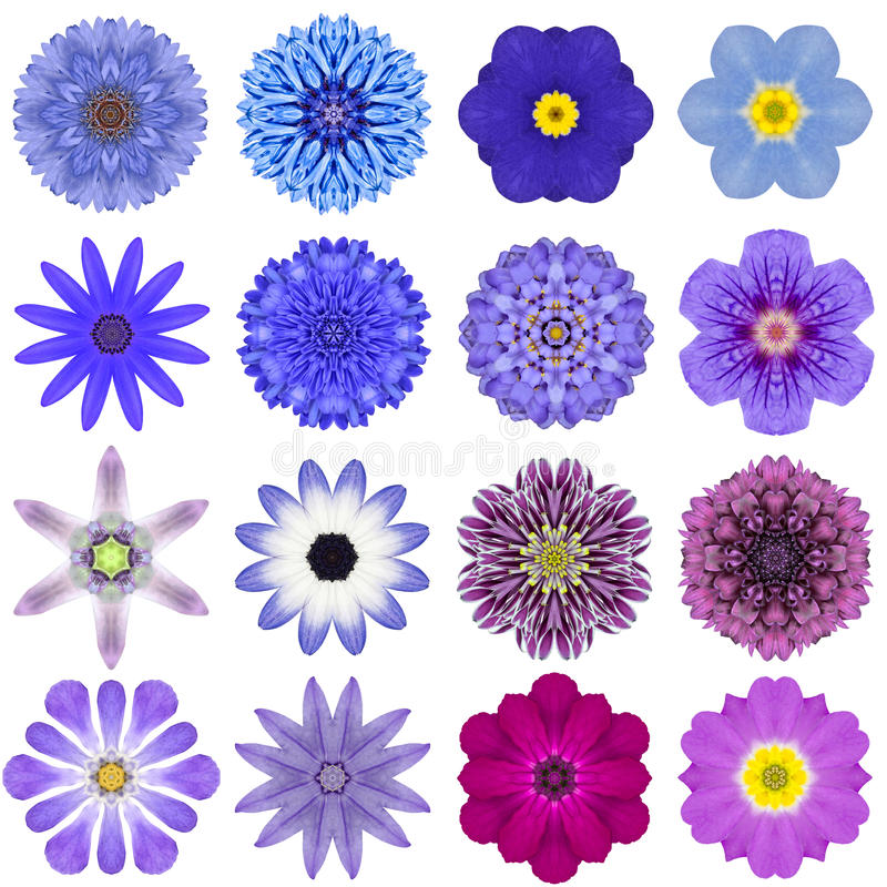 Collection Various Blue Concentric Flowers Isolated on White royalty free stock photos