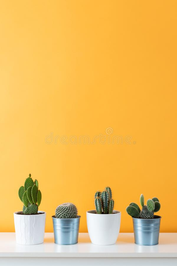 Collection of various potted cactus house plants on white shelf against pastel mustard colored wall. Collection of various cactus plants in different pots royalty free stock photography
