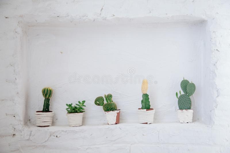 Collection of various cactus and succulent plants in different pots. Potted cactus house plants on white shelf against white wall. royalty free stock photo