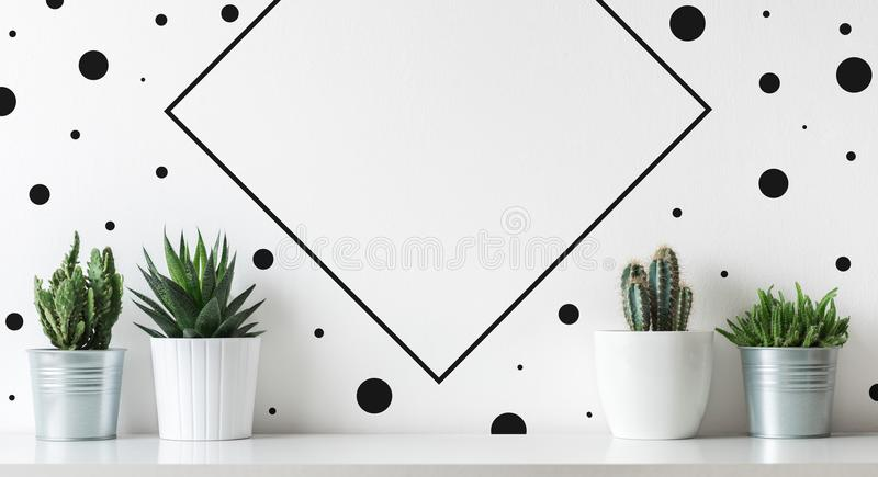 Collection of various cactus and succulent plants in different pots. Potted cactus house plants on white shelf. Modern scandinavian decor stock images