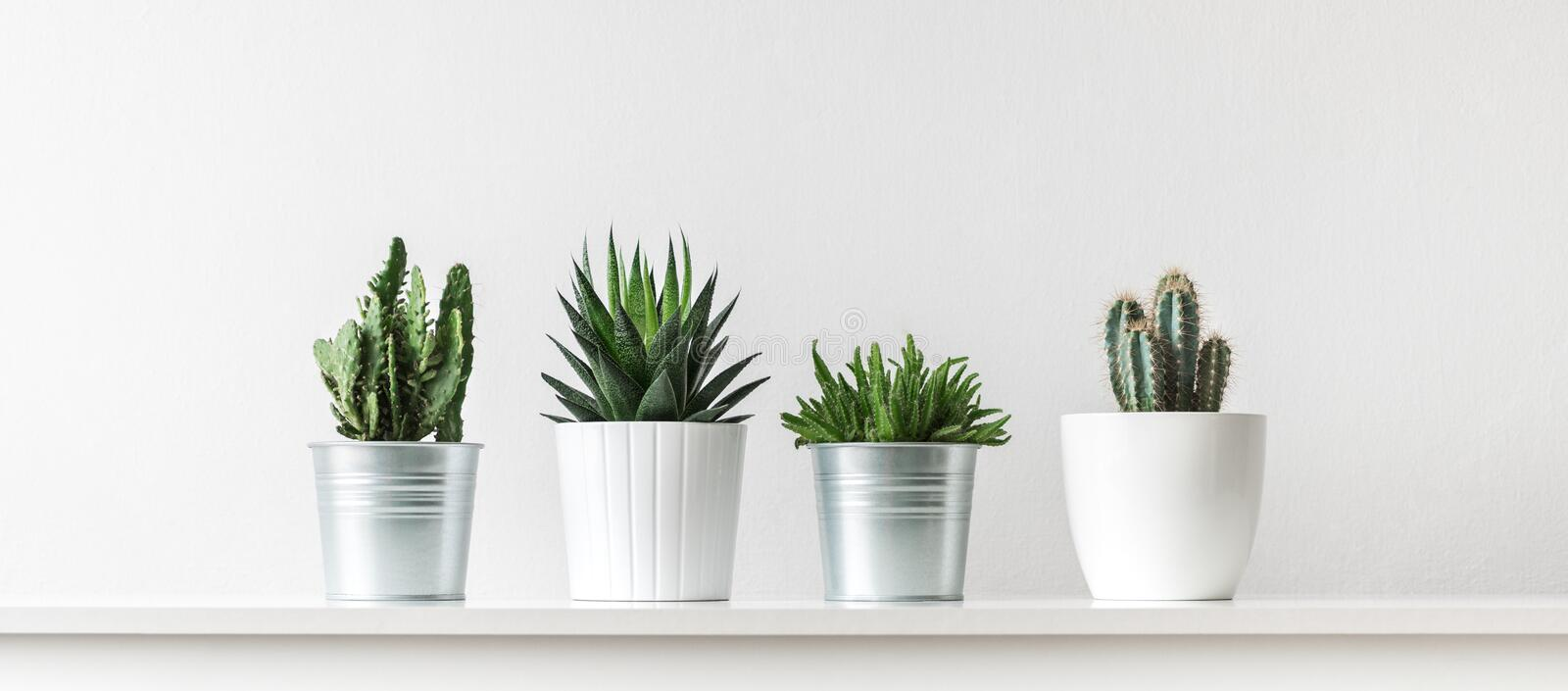 Collection of various cactus and succulent plants in different pots. Potted cactus house plants on white shelf. Collection of various cactus and succulent royalty free stock image