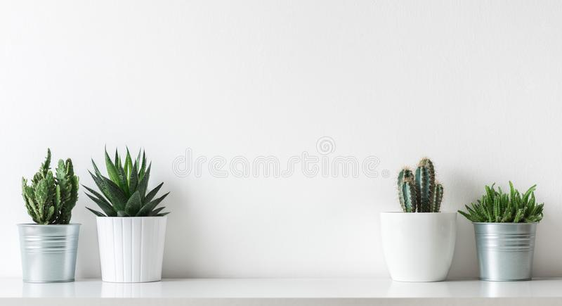 Collection of various cactus and succulent plants in different pots. Potted cactus house plants on white shelf. Collection of various cactus and succulent stock photos