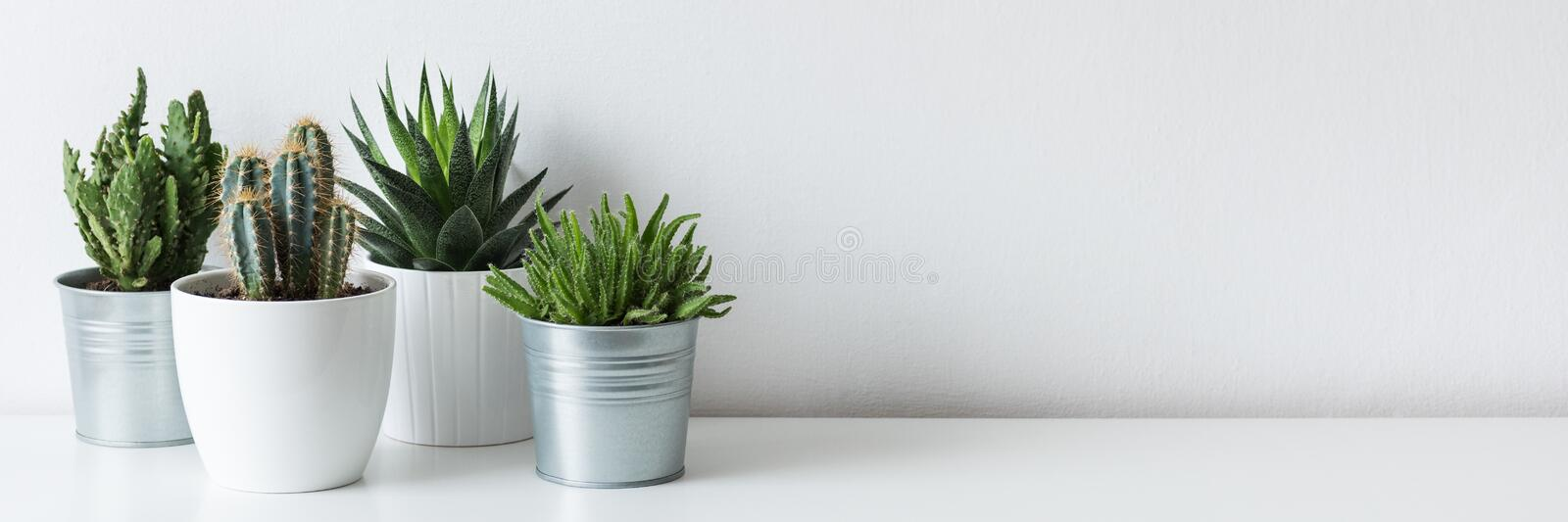 Collection of various cactus and succulent plants in different pots. Potted cactus house plants on white shelf. stock image