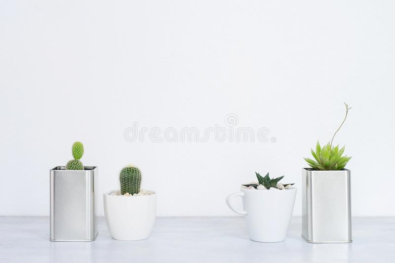 Collection of various cactus and succulent plants i royalty free stock photography