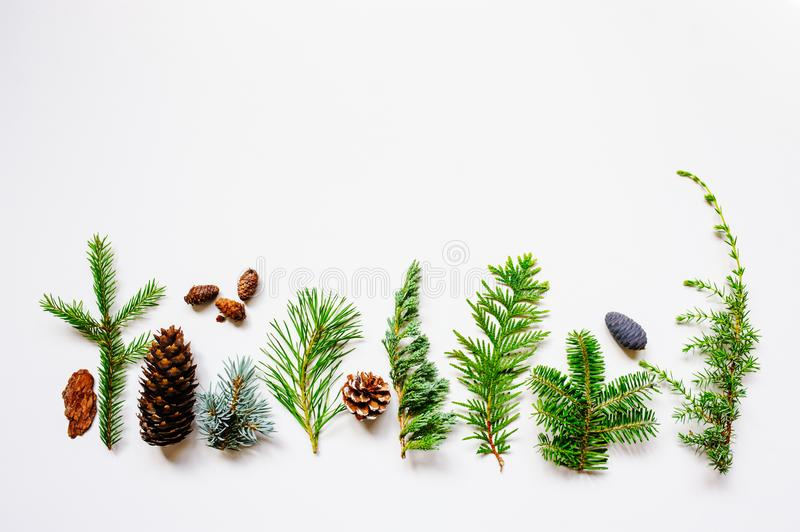 Collection of various conifers and its cones on white backround. Set of juniperus, thuja, picea, abies, and pinus on white background. Botanical evergreen flat royalty free stock photos