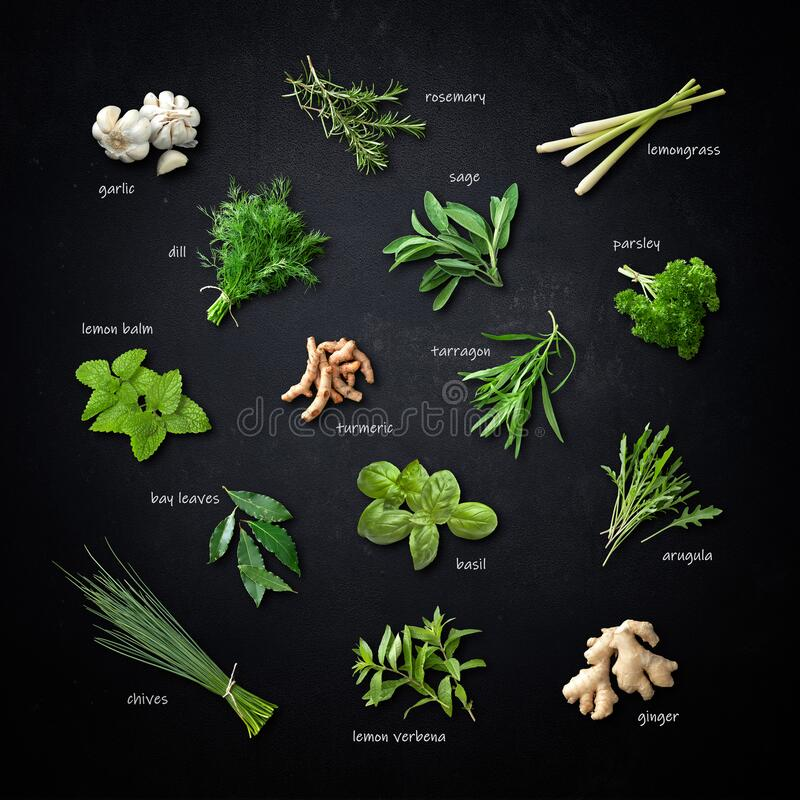 Collection of various fresh herbs and spices on black background stock photos