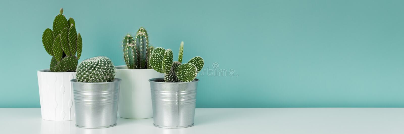 Collection of various potted cactus house plants on white shelf against pastel turquoise colored wall. Cactus plants banner. Modern room decoration. Collection stock photography