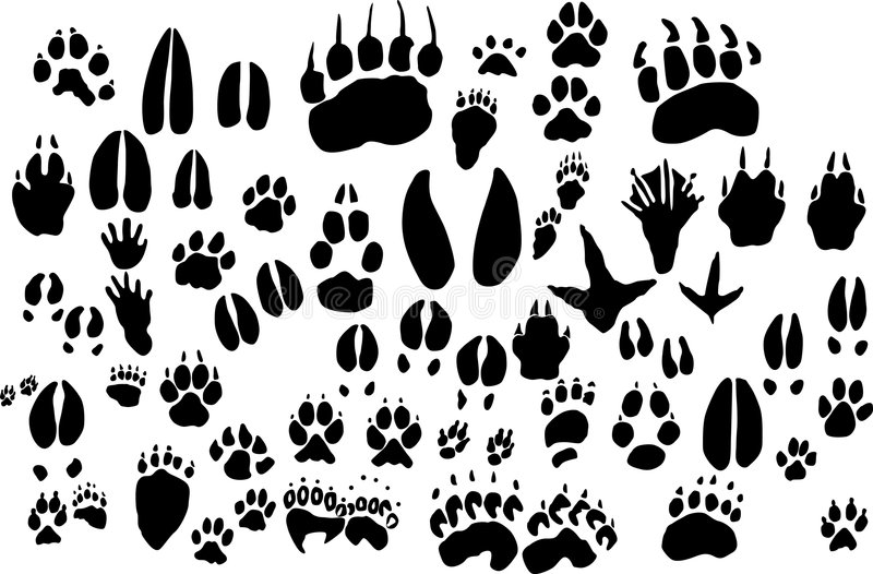 Collection of vector outlines of animal foot print vector illustration